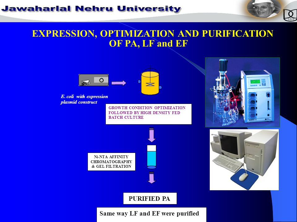 EXPRESSION, OPTIMIZATION AND PURIFICATION OF PA, LF and EF Ni-NTA AFFINITY CHROMATOGRAPHY & GEL FILTRATION GROWTH CONDITION OPTIMIZATION FOLLOWED BY HIGH DENSITY FED BATCH CULTURE E.coli with expression plasmid construct PAG PURIFIED PA Same way LF and EF were purified