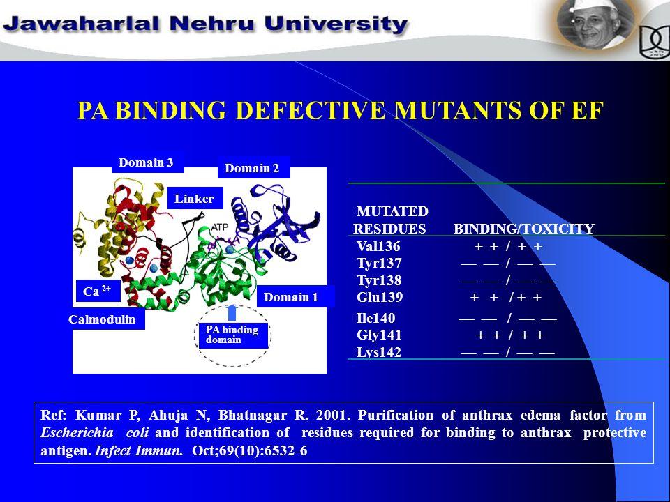 PA BINDING DEFECTIVE MUTANTS OF EF Domain 1 Domain 2 Domain 3 PA binding domain Linker Calmodulin Ca 2+ Ref: Kumar P, Ahuja N, Bhatnagar R.