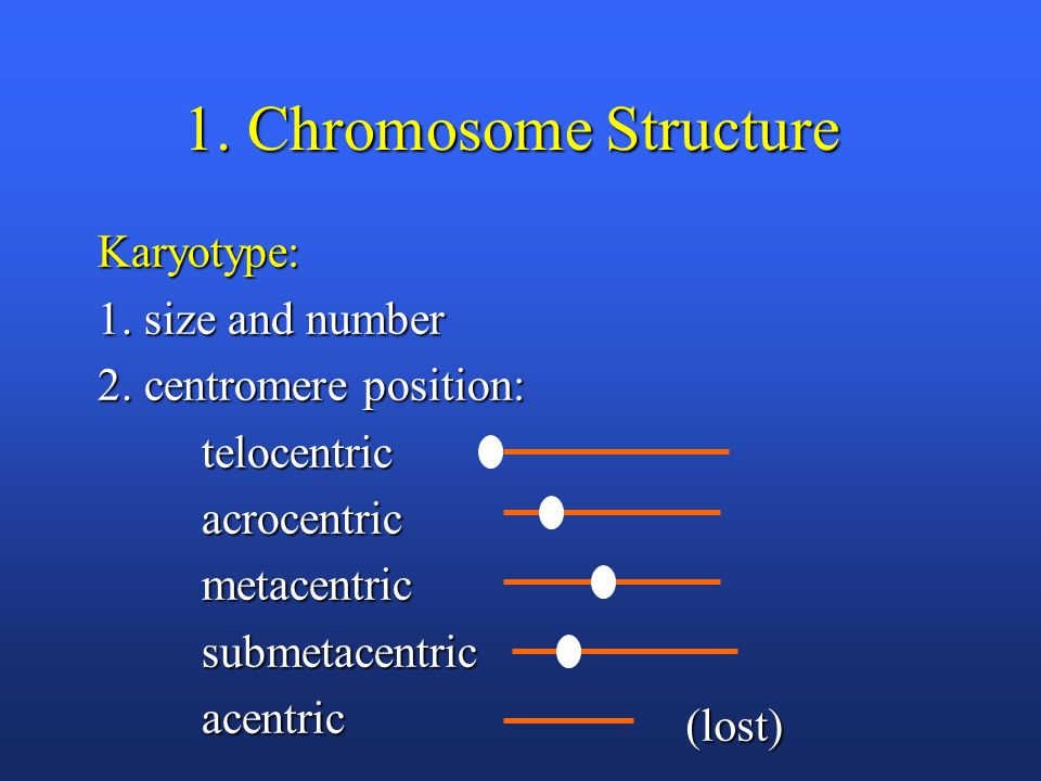 1. Chromosome Structure Karyotype: 1. size and number 2.