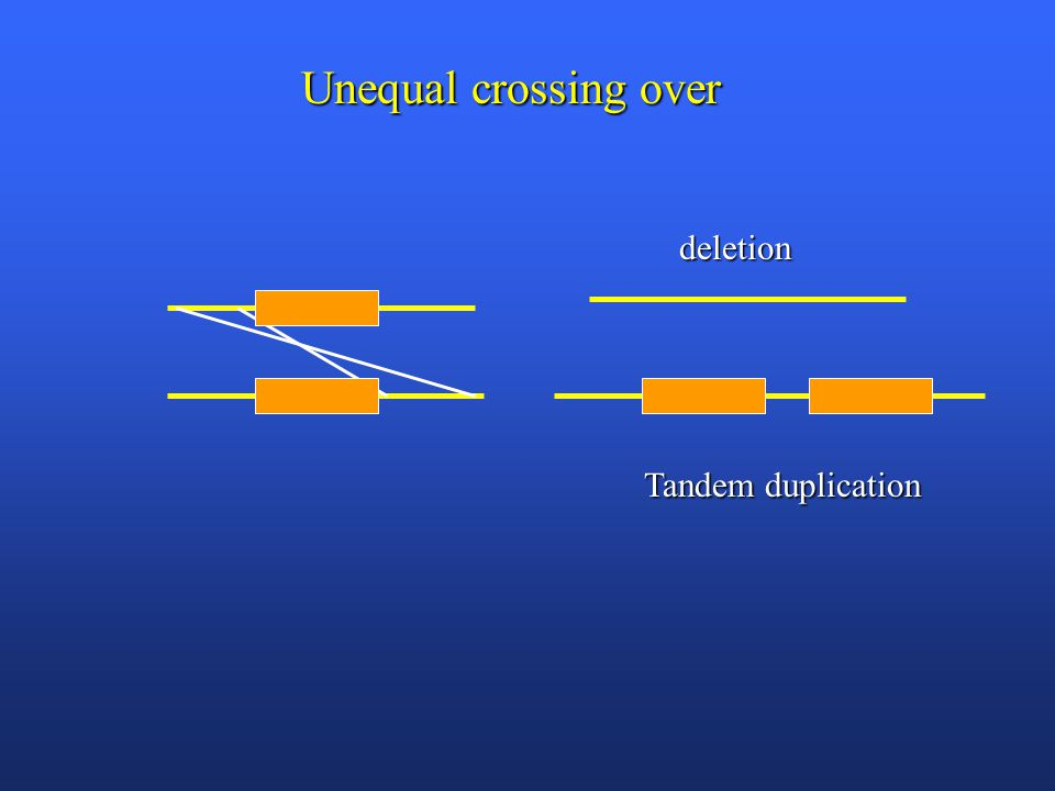 deletion Tandem duplication Unequal crossing over