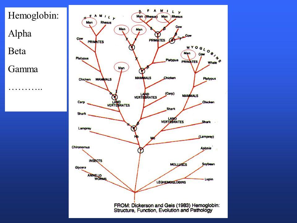 Hemoglobin: Alpha Beta Gamma ………..