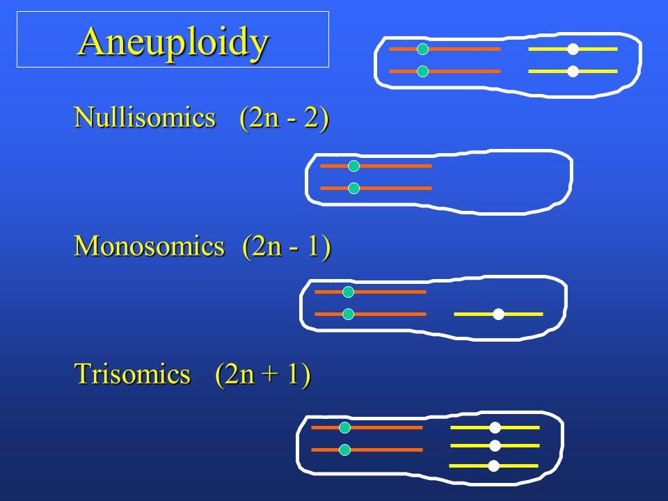 Aneuploidy Nullisomics (2n - 2) Monosomics (2n - 1) Trisomics (2n + 1)