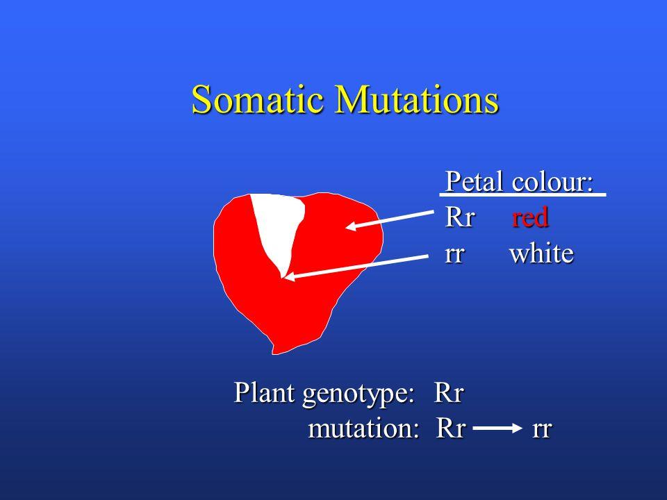 Genetics of Deletions Reduced map distance ( chromosome shortened)Reduced map distance ( chromosome shortened) Recessive lethalRecessive lethal Deletion loop (detected during meiosis)Deletion loop (detected during meiosis)