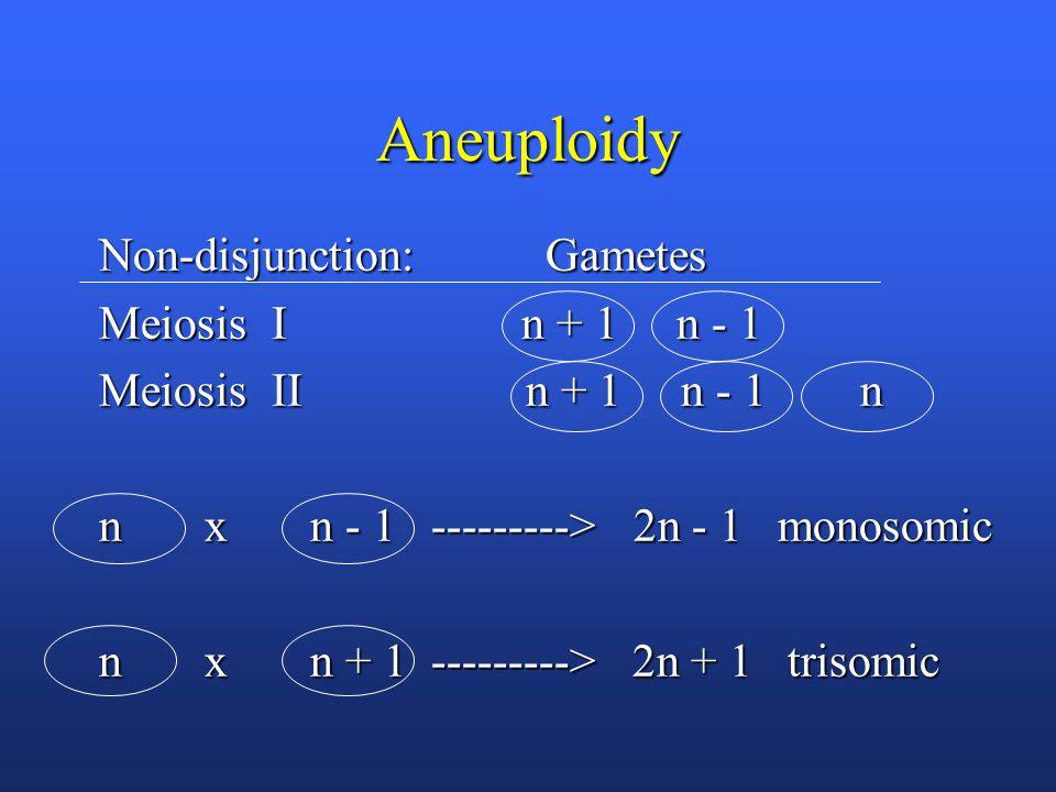 Aneuploidy Non-disjunction: Gametes Meiosis I n + 1 n - 1 Meiosis II n + 1 n - 1 n n x n - 1 ---------> 2n - 1 monosomic n x n + 1 ---------> 2n + 1 trisomic