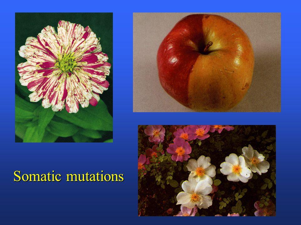 Germinal mutations AA (blue) mutation mutation Aa  self  aa(white)
