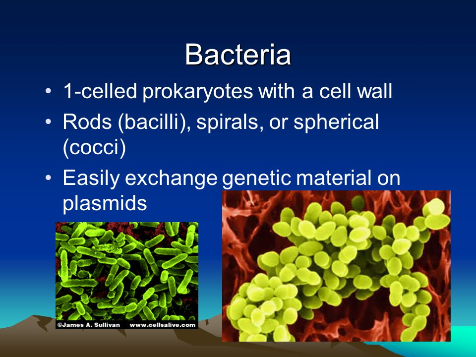 Bacteria 1-celled prokaryotes with a cell wall Rods (bacilli), spirals, or spherical (cocci) Easily exchange genetic material on plasmids