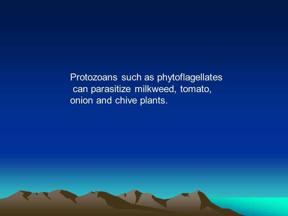 Protozoans such as phytoflagellates can parasitize milkweed, tomato, onion and chive plants.