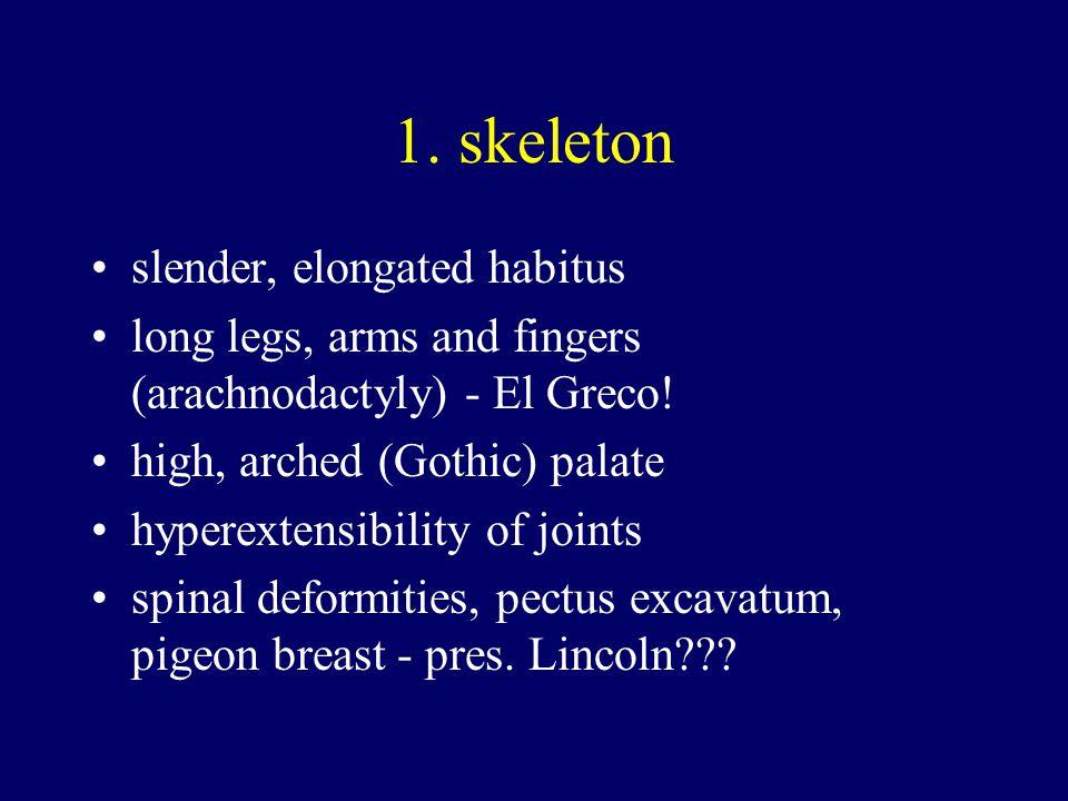 1.skeleton slender, elongated habitus long legs, arms and fingers (arachnodactyly) - El Greco.