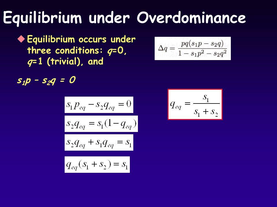 Equilibrium under Overdominance uEquilibrium occurs under three conditions: q=0, q=1 (trivial), and s 1 p – s 2 q = 0