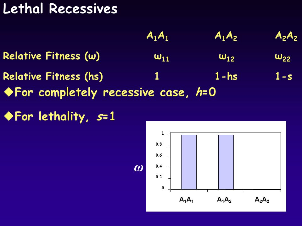 Lethal Recessives uFor completely recessive case, h=0 uFor lethality, s=1 ω A1A1A1A1 A1A2A1A2 A2A2A2A2 0 0.2 0.4 0.6 0.8 1 A1A1A1A1 A1A2A1A2 A2A2A2A2 A1A1A1A1 A1A2A1A2 A2A2A2A2 A 1 A 1 A 1 A 2 A 2 A 2 Relative Fitness (ω)ω 11 ω 12 ω 22 Relative Fitness (hs)1 1-hs 1-s