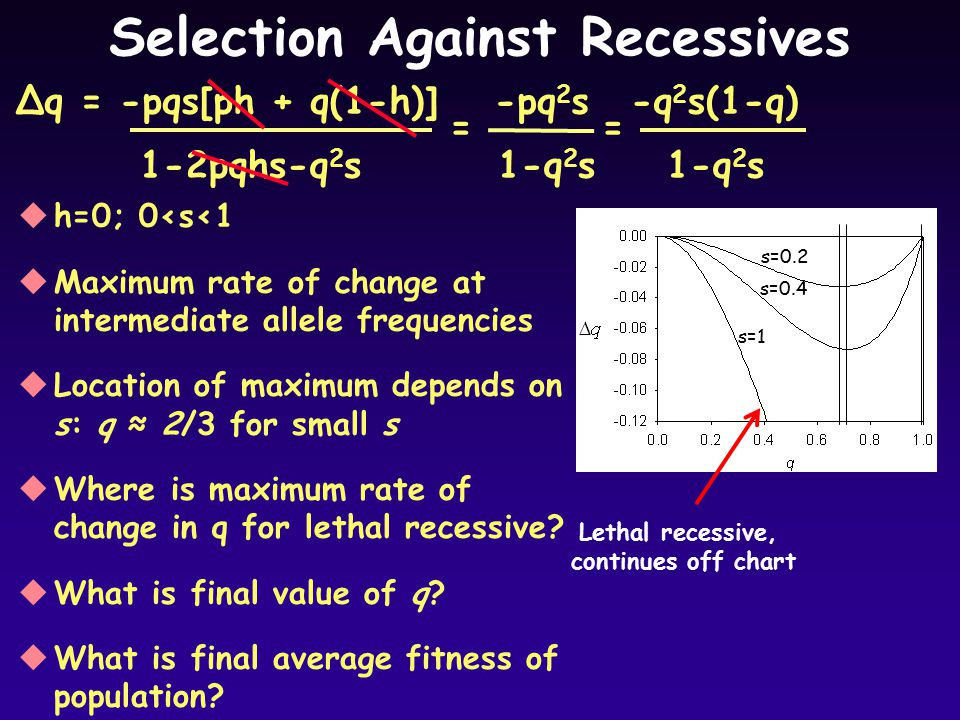 Selection Against Recessives uh=0; 0<s<1 uMaximum rate of change at intermediate allele frequencies uLocation of maximum depends on s: q ≈ 2/3 for small s uWhere is maximum rate of change in q for lethal recessive.