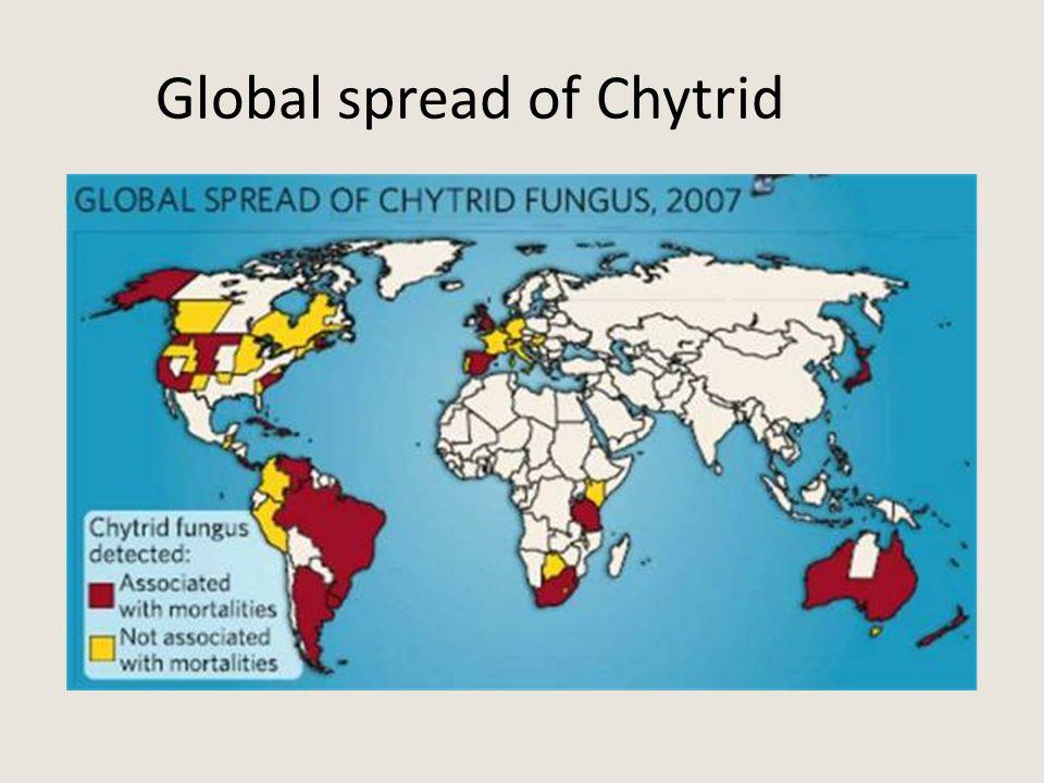 Global spread of Chytrid