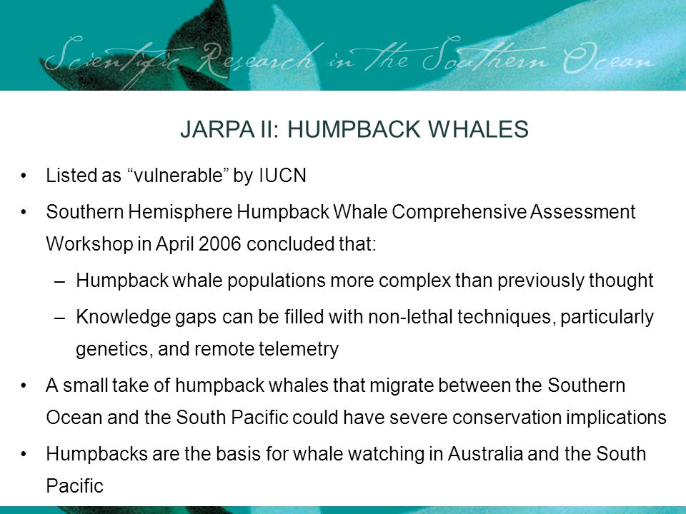 JARPA II: HUMPBACK WHALES Listed as vulnerable by IUCN Southern Hemisphere Humpback Whale Comprehensive Assessment Workshop in April 2006 concluded that: –Humpback whale populations more complex than previously thought –Knowledge gaps can be filled with non-lethal techniques, particularly genetics, and remote telemetry A small take of humpback whales that migrate between the Southern Ocean and the South Pacific could have severe conservation implications Humpbacks are the basis for whale watching in Australia and the South Pacific