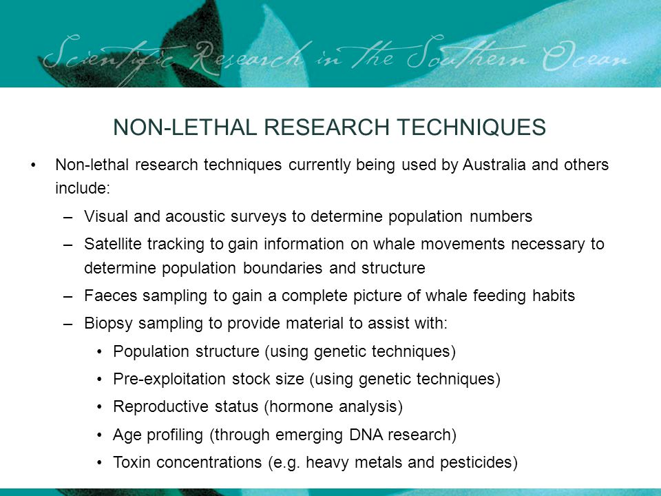 NON-LETHAL RESEARCH TECHNIQUES Non-lethal research techniques currently being used by Australia and others include: –Visual and acoustic surveys to determine population numbers –Satellite tracking to gain information on whale movements necessary to determine population boundaries and structure –Faeces sampling to gain a complete picture of whale feeding habits –Biopsy sampling to provide material to assist with: Population structure (using genetic techniques) Pre-exploitation stock size (using genetic techniques) Reproductive status (hormone analysis) Age profiling (through emerging DNA research) Toxin concentrations (e.g.