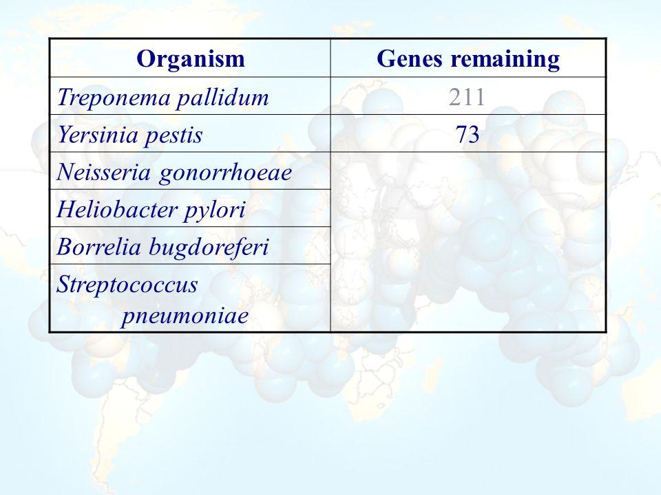 OrganismGenes remaining Treponema pallidum 211 Yersinia pestis 73 Neisseria gonorrhoeae Heliobacter pylori Borrelia bugdoreferi Streptococcus pneumoni