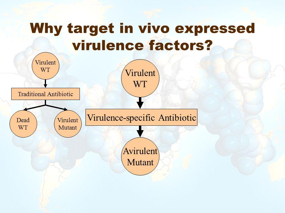 Why target in vivo expressed virulence factors? Virulent WT Virulence-specific Antibiotic Avirulent Mutant Virulent WT Dead WT Traditional Antibiotic