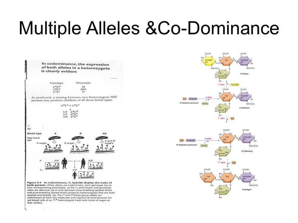 Multiple Alleles &Co-Dominance