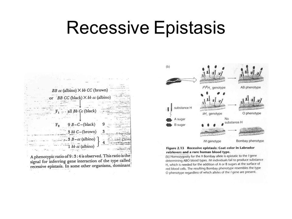 Recessive Epistasis