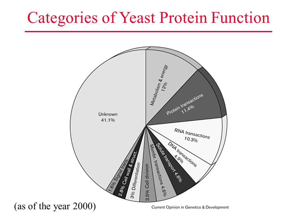 Categories of Yeast Protein Function (as of the year 2000)