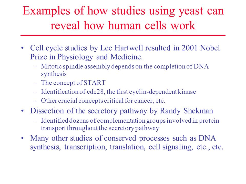 Examples of how studies using yeast can reveal how human cells work Cell cycle studies by Lee Hartwell resulted in 2001 Nobel Prize in Physiology and