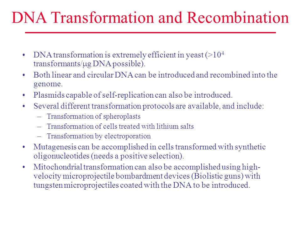 DNA Transformation and Recombination DNA transformation is extremely efficient in yeast (>10 4 transformants/  g DNA possible). Both linear and circu