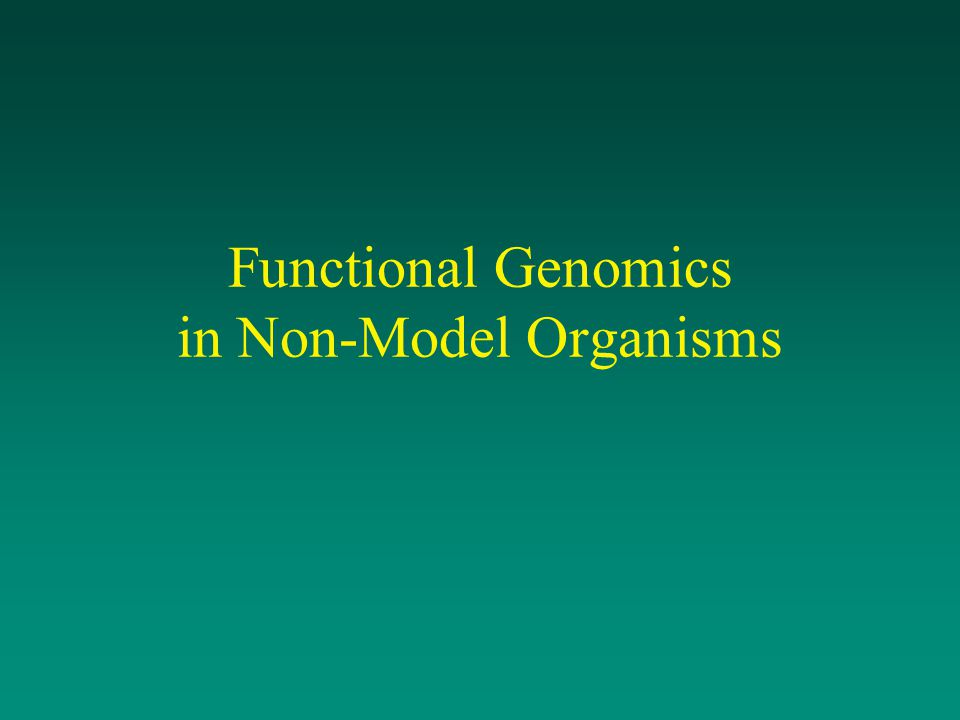 What is Functional Genomics.