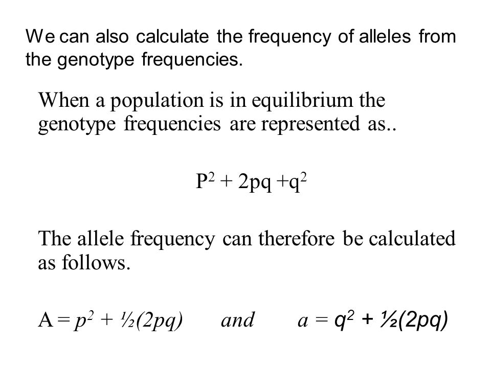 We can also calculate the frequency of alleles from the genotype frequencies. When a population is in equilibrium the genotype frequencies are represe