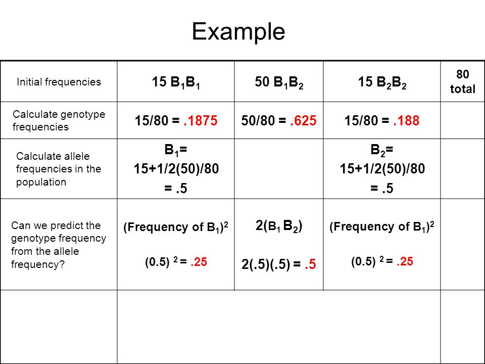 Example Initial frequencies 15 B 1 B 1 50 B 1 B 2 15 B 2 B 2 80 total Calculate genotype frequencies 15/80 =.187550/80 =.62515/80 =.188 Calculate alle
