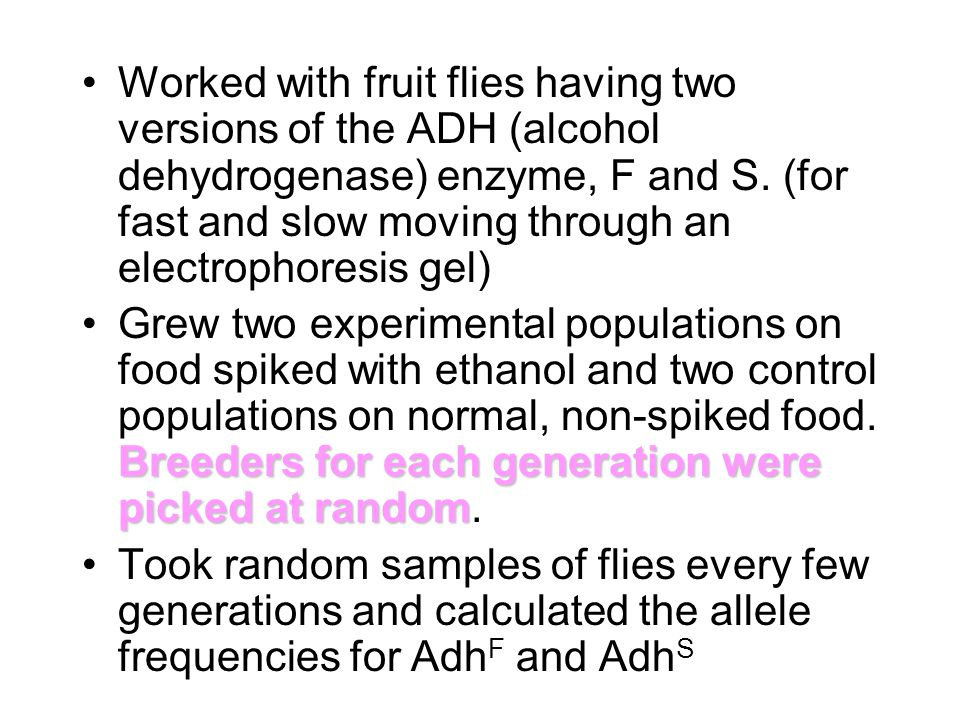 Worked with fruit flies having two versions of the ADH (alcohol dehydrogenase) enzyme, F and S.