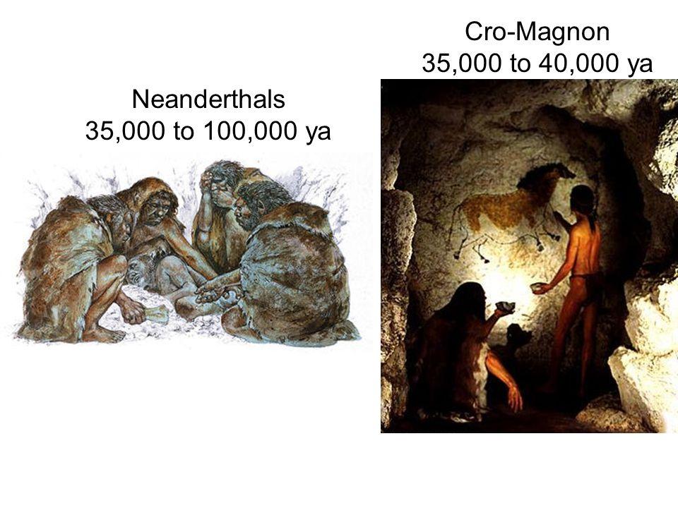 Neanderthals 35,000 to 100,000 ya Cro-Magnon 35,000 to 40,000 ya