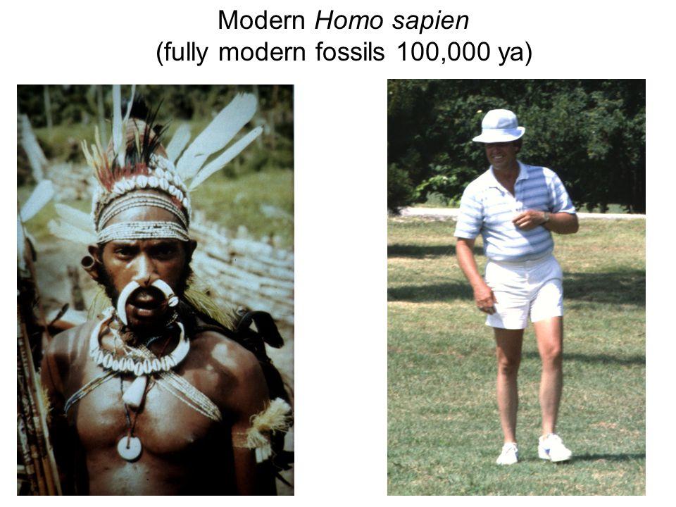 Modern Homo sapien (fully modern fossils 100,000 ya)
