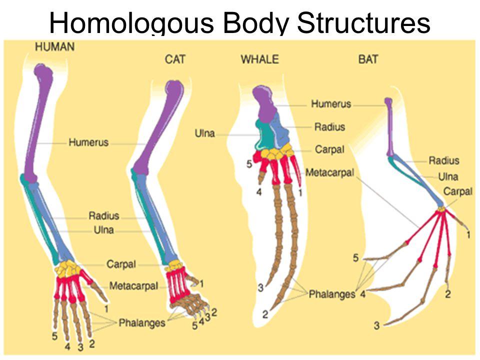 Homologous Body Structures