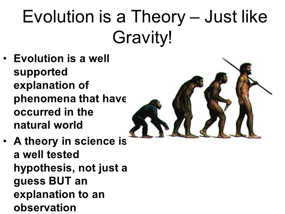 Evolution is a Theory – Just like Gravity.