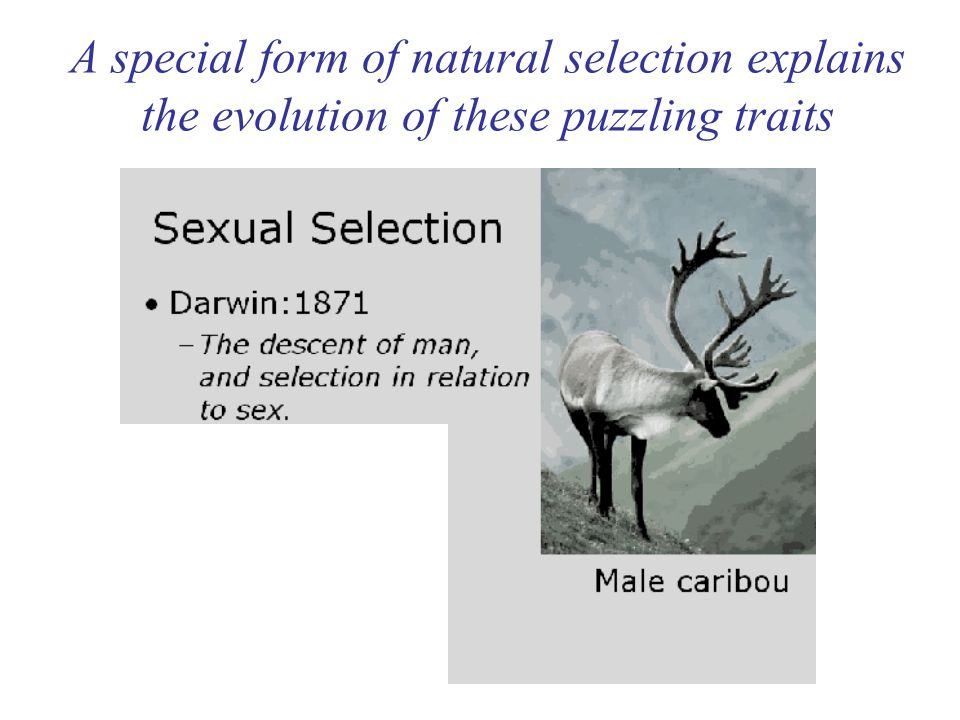 A special form of natural selection explains the evolution of these puzzling traits
