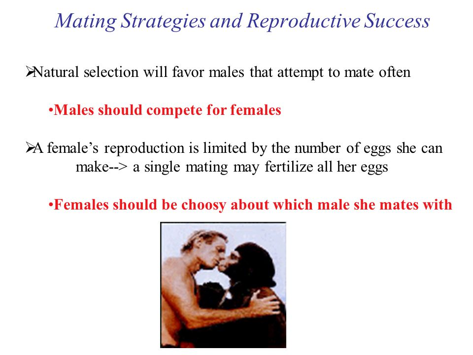 Mating Strategies and Reproductive Success  Natural selection will favor males that attempt to mate often Males should compete for females  A female's reproduction is limited by the number of eggs she can make--> a single mating may fertilize all her eggs Females should be choosy about which male she mates with