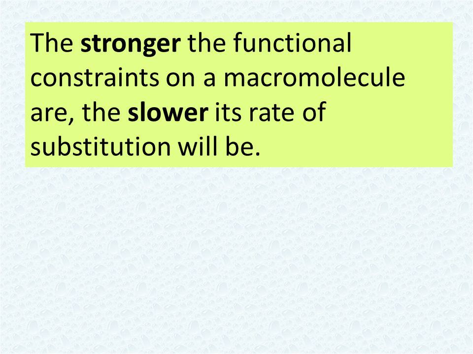 The stronger the functional constraints on a macromolecule are, the slower its rate of substitution will be.