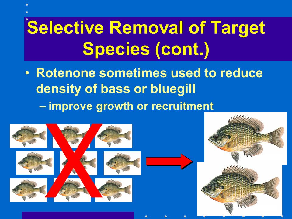 Selective Removal of Target Species (cont.) Rotenone sometimes used to reduce density of bass or bluegill –improve growth or recruitment X