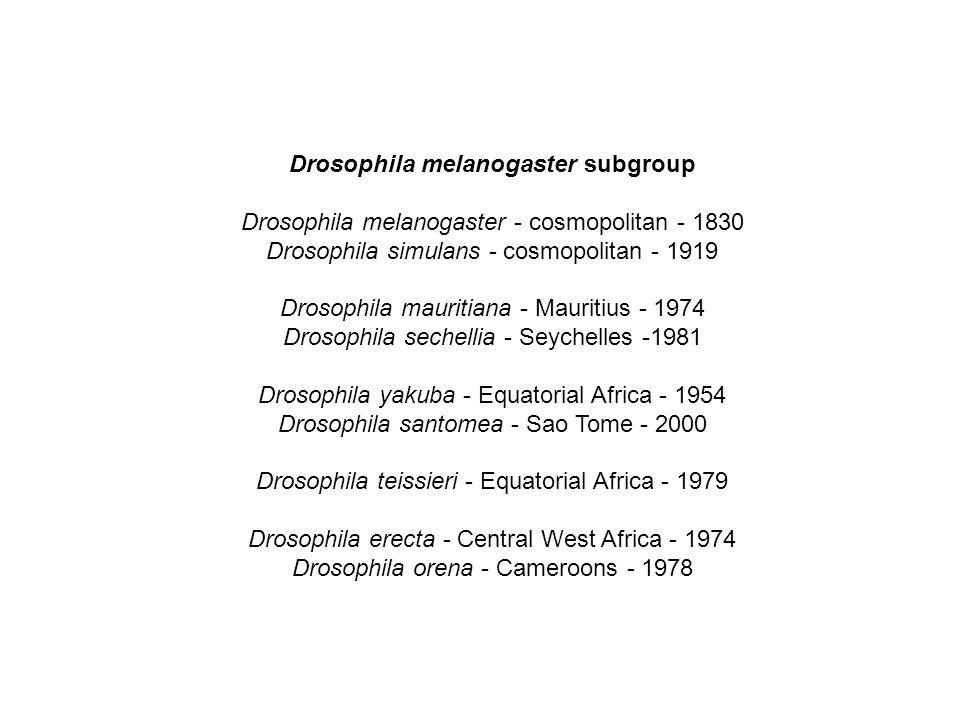 Drosophila melanogaster subgroup Drosophila melanogaster - cosmopolitan - 1830 Drosophila simulans - cosmopolitan - 1919 Drosophila mauritiana - Mauri