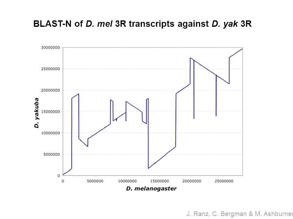 BLAST-N of D. mel 3R transcripts against D. yak 3R J. Ranz, C. Bergman & M. Ashburner