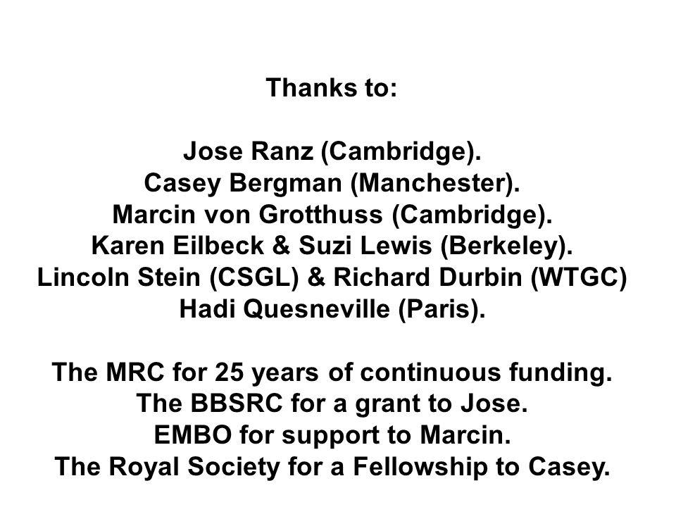 Thanks to: Jose Ranz (Cambridge). Casey Bergman (Manchester). Marcin von Grotthuss (Cambridge). Karen Eilbeck & Suzi Lewis (Berkeley). Lincoln Stein (