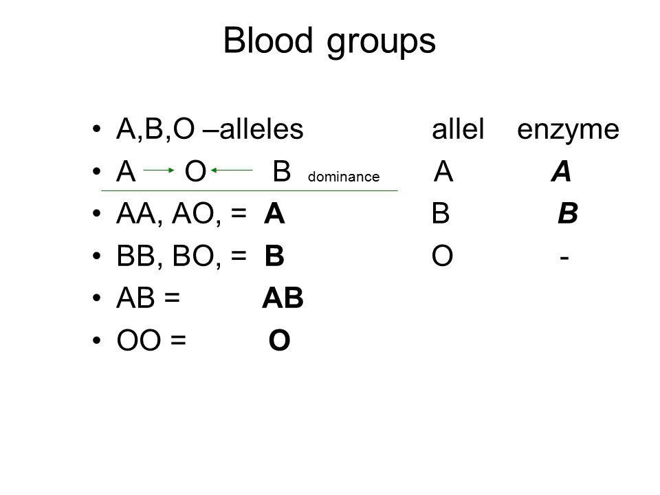 Blood groups A,B,O –alleles allel enzyme A O B dominance A A AA, AO, = A B B BB, BO, = B O - AB = AB OO = O