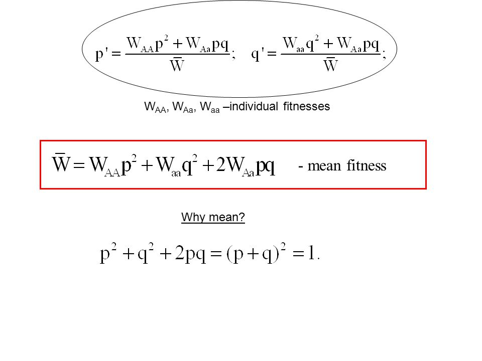 Convergence to equilibria In intermediate cases: W aa  W Aa  W AA (or W AA  W Aa  W aa ) The population has no polymorphic equilibria