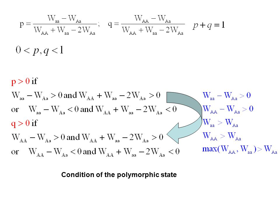 Condition of the polymorphic state