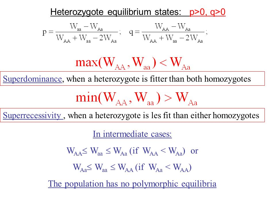 Superdominance, when a heterozygote is fitter than both homozygotes Superrecessivity, when a heterozygote is les fit than either homozygotes In intermediate cases: W AA  W aa  W Aa (if W AA < W Aa ) or W Aa  W aa  W AA (if W Aa < W AA ) The population has no polymorphic equilibria Heterozygote equilibrium states: p>0, q>0