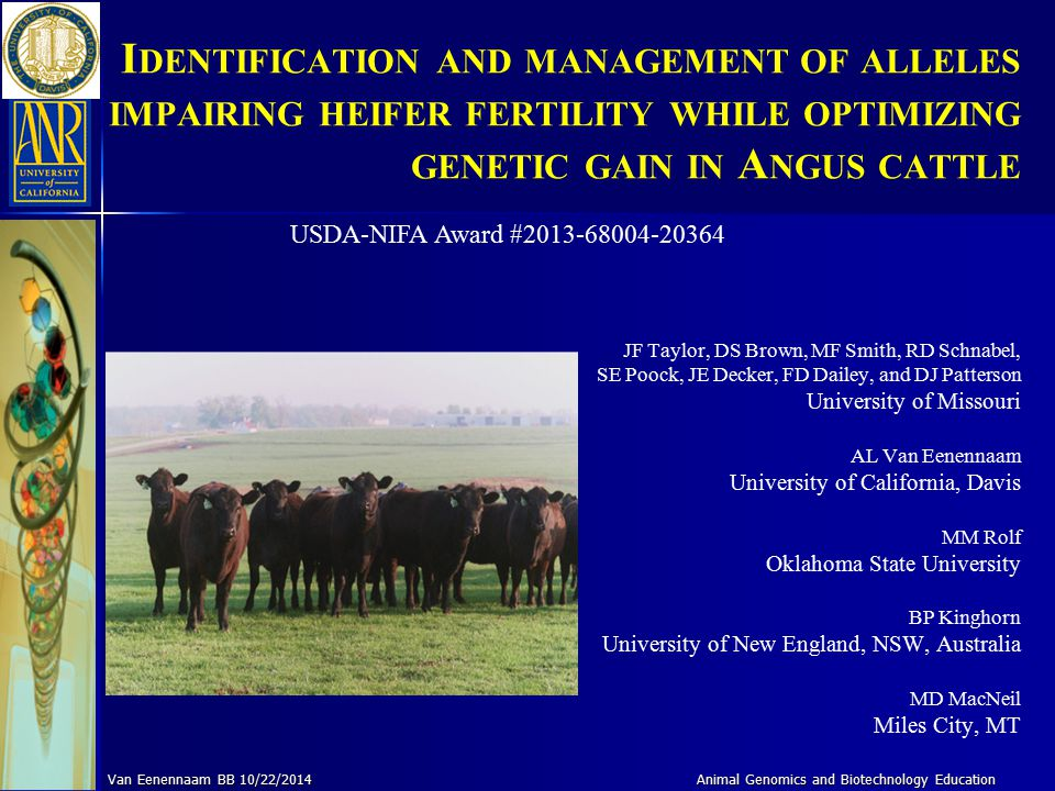 I DENTIFICATION AND MANAGEMENT OF ALLELES IMPAIRING HEIFER FERTILITY WHILE OPTIMIZING GENETIC GAIN IN A NGUS CATTLE JF Taylor, DS Brown, MF Smith, RD
