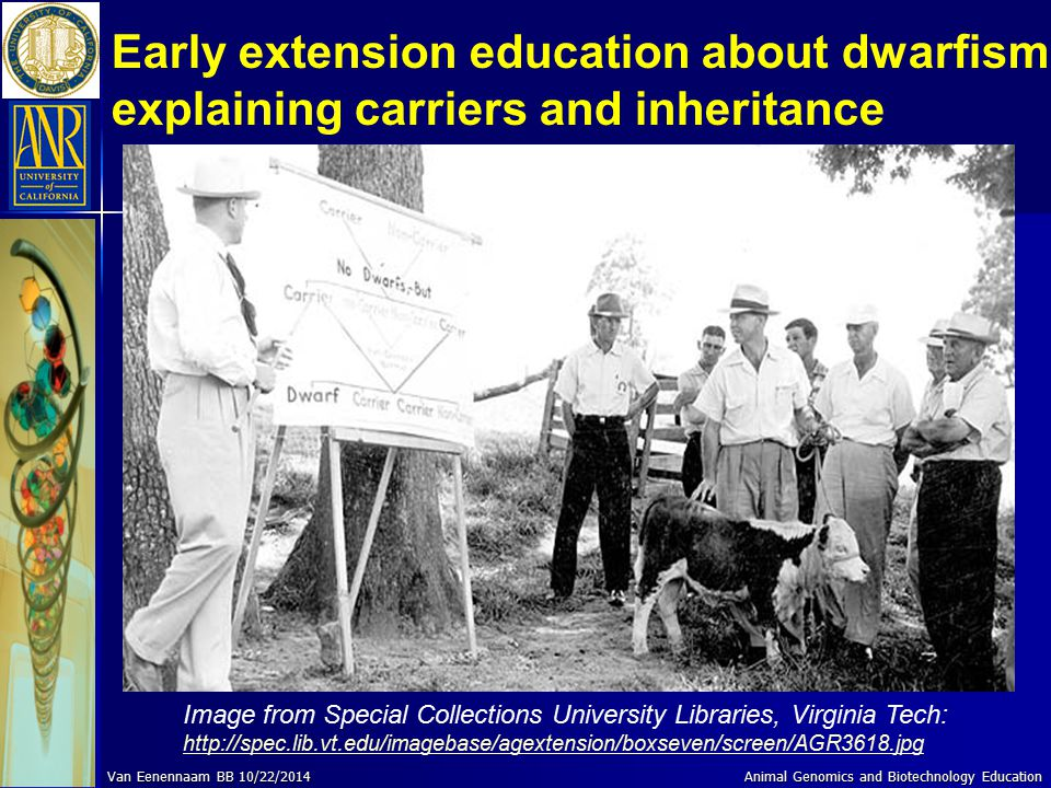 Early extension education about dwarfism explaining carriers and inheritance Image from Special Collections University Libraries, Virginia Tech: http: