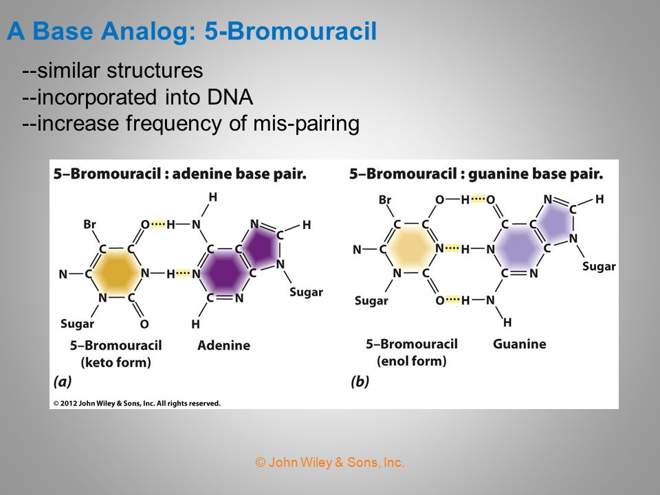 Mutagenic Effects of 5-Bromouracil © John Wiley & Sons, Inc.