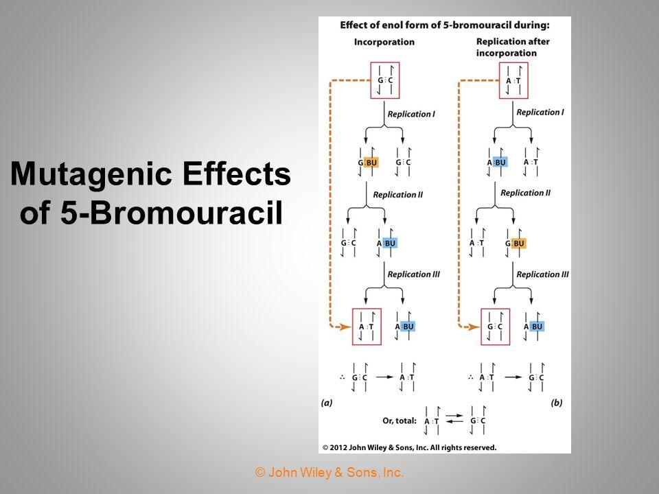 Nitrous Acid Causes Oxidative Deamination of Bases © John Wiley & Sons, Inc.