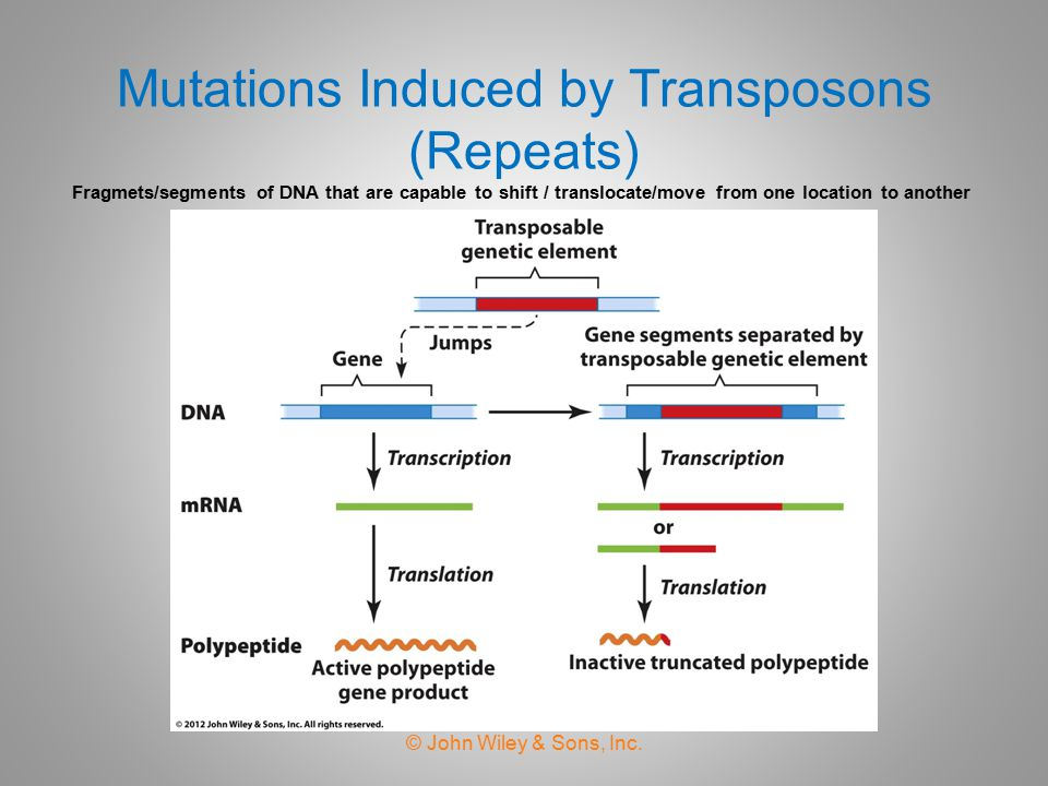 Expansion of Trinucleotide Repeats  Simple tandem repeats are repeated sequence of one to six nucleotide pairs (CGG, CAG and CTG).