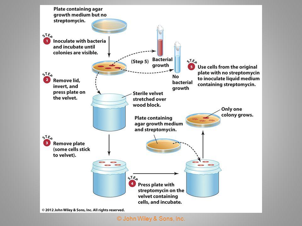 Mutation: A Reversible Process  Forward mutation—mutation of a wild- type allele to a mutant allele.